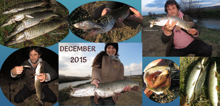 Fishing Results from December 2015 with the Custom Lures Realwobbler