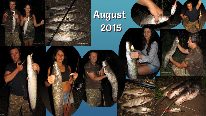 Fishing Results in August 2015 using the Realwobbler Lures