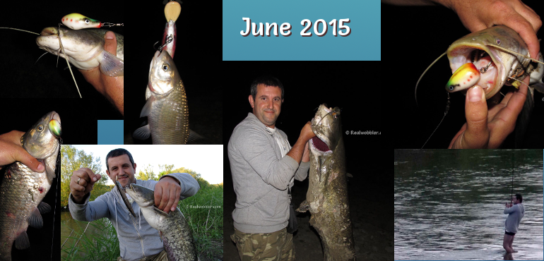 Catches in June 2015