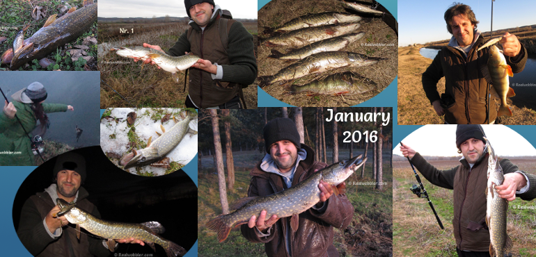 Catches in January 2016 with Realwobbler Custom Lures