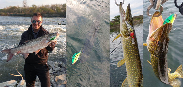 Asp and Pikes on the handmade Retro Lures