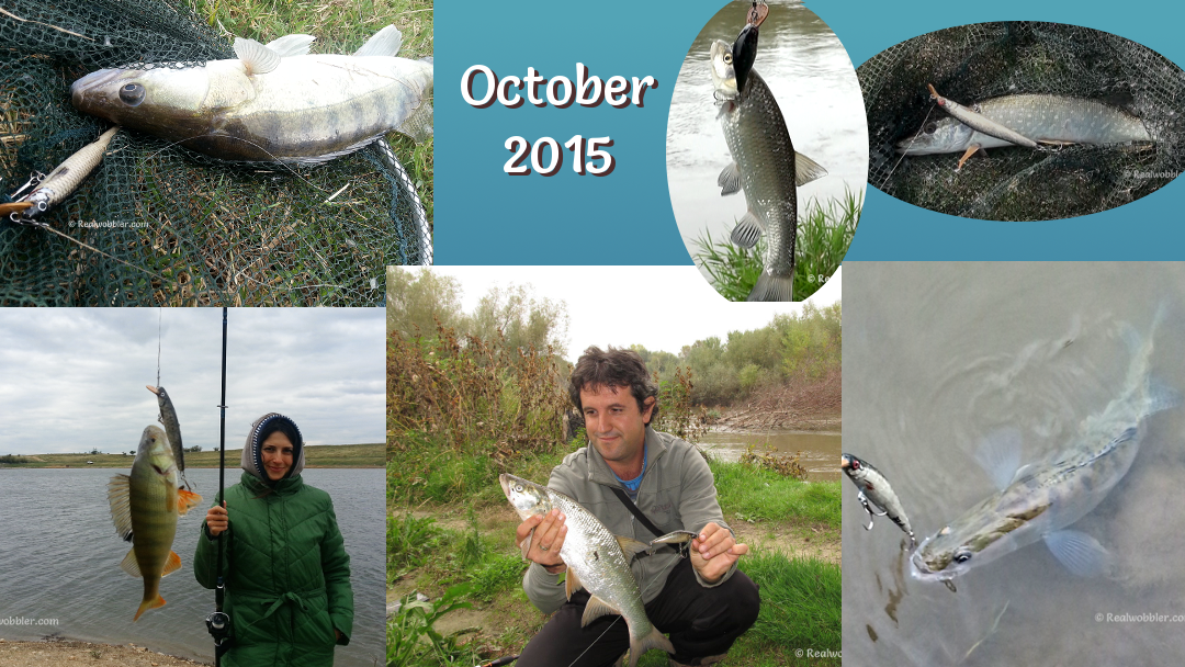 Fishing Results from November 2015 with October with the Custom Lures Realwobbler